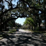 Trees in Historic Sanford FL